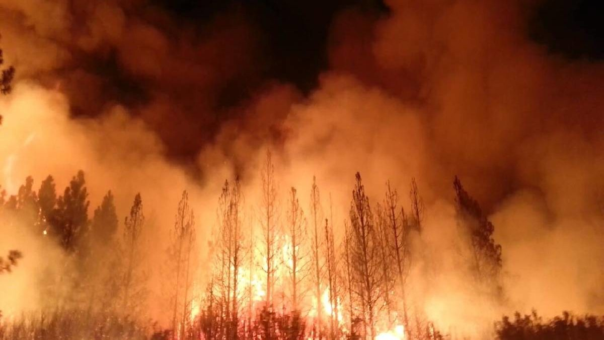 What is WildFire? Causes, Effects, Anthropogenic, and More